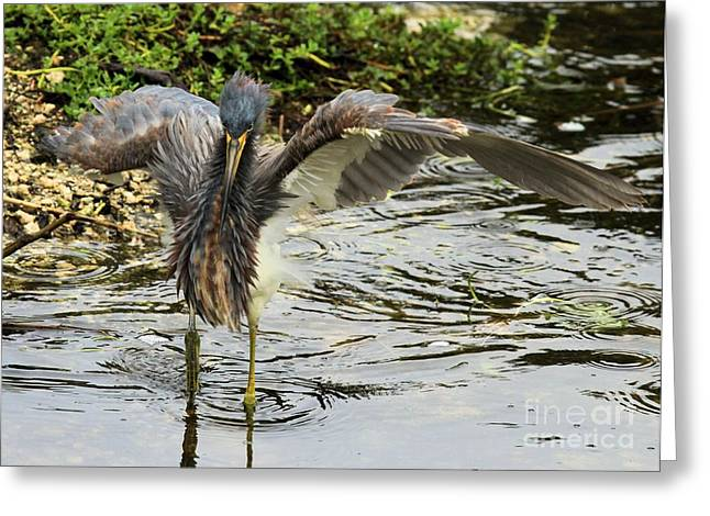 Tri-colored Heron Greeting Cards - Spaz Greeting Card by Adam Jewell