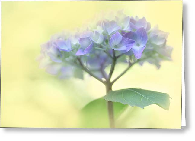Purple Hydrangeas Greeting Cards - Speak Softly Hydrangea Flower Greeting Card by Jennie Marie Schell