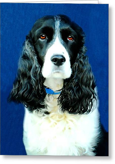 Puppy Dog Eyes Greeting Cards - Speaking of Annie Greeting Card by Diana Angstadt