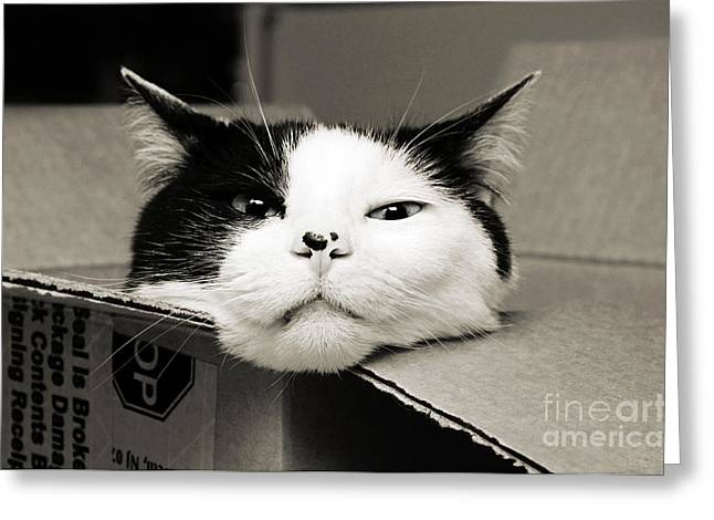 Andee Photography Greeting Cards - Special Delivery Its Pepper The Cat  Greeting Card by Andee Design