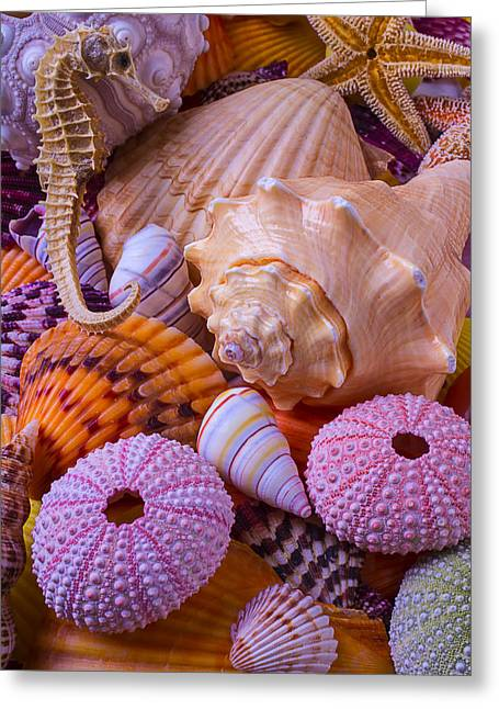 Orange Starfish Greeting Cards - Special Shells Greeting Card by Garry Gay
