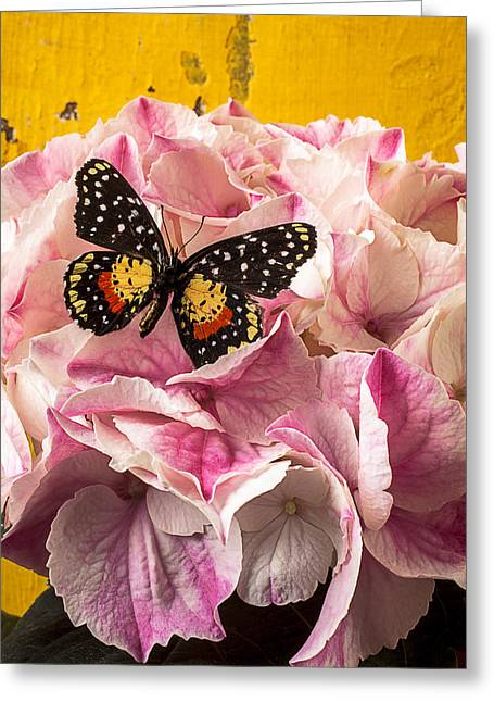 Speckles Greeting Cards - Speckled butterfly on pink hydrangea Greeting Card by Garry Gay