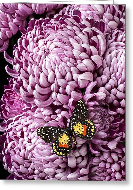 Speckles Greeting Cards - Speckled butterfly on red mum Greeting Card by Garry Gay