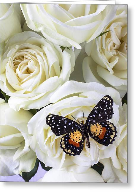 Floral Photographs Greeting Cards - Speckled butterfly on white rose Greeting Card by Garry Gay