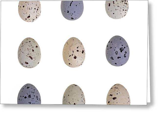 Shell Pattern Greeting Cards - Speckled egg tic-tac-toe Greeting Card by Jane Rix