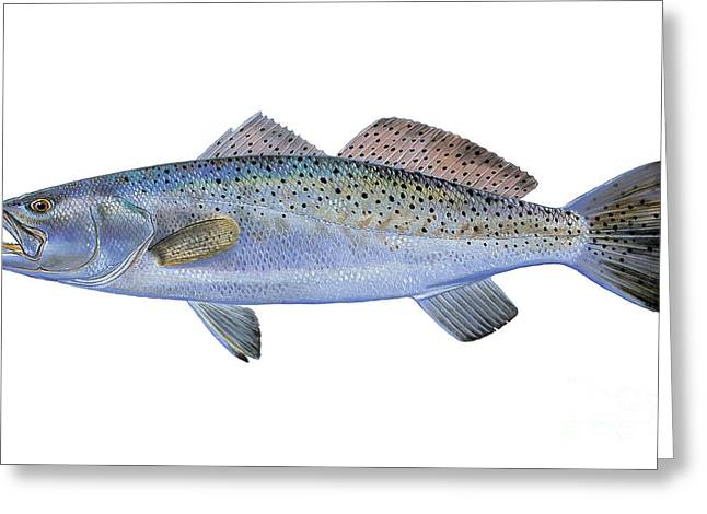 Miami Paintings Greeting Cards - Speckled Trout Greeting Card by Carey Chen