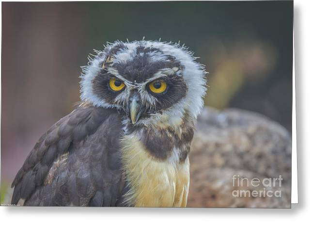 Different Owl Greeting Cards - Spectacle Owl Greeting Card by Mitch Shindelbower