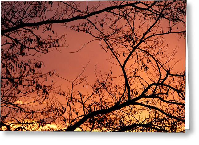 Spectacular Greeting Cards - Spectacular Sky And Silhouettes Greeting Card by Will Borden