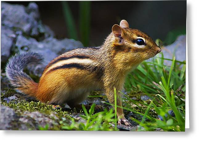 Critter Greeting Cards - Speedy Greeting Card by Bill Caldwell -        ABeautifulSky Photography