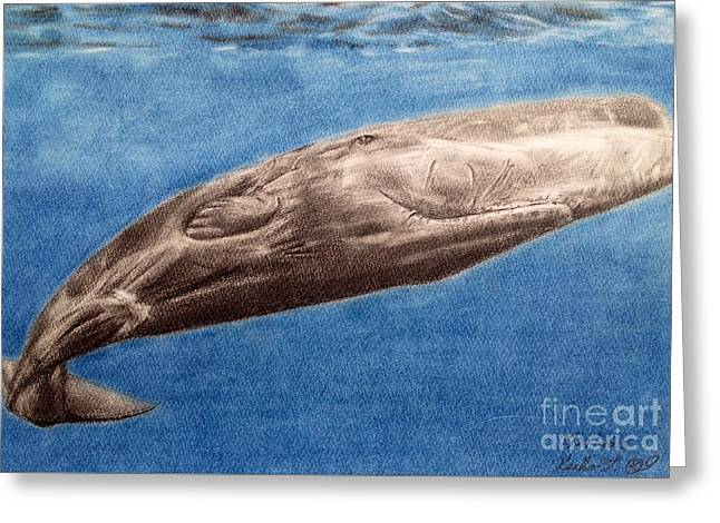 Whale Pastels Greeting Cards - Sperm whale Greeting Card by Keiko Olds