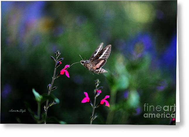 Flying Insects Greeting Cards - Sphinx Moth and Summer Flowers Greeting Card by Karen Slagle