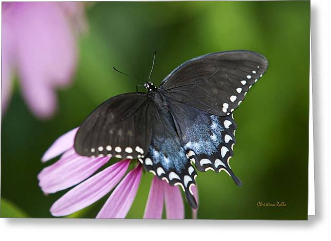 Butterfly On Flower Greeting Cards - Spice Of Life Butterfly Greeting Card by Christina Rollo