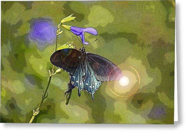 Spicebush Digital Art Greeting Cards - Spicebush Swallowtail II Greeting Card by Suzanne Gaff
