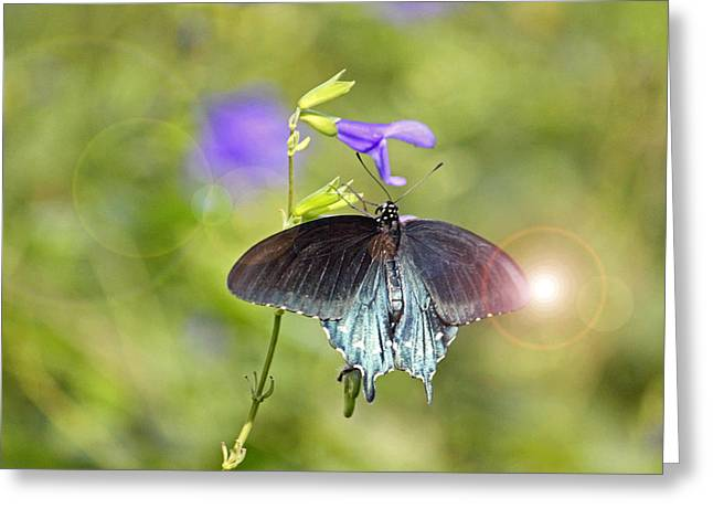 Spicebush Digital Art Greeting Cards - Spicebush Swallowtail Greeting Card by Suzanne Gaff
