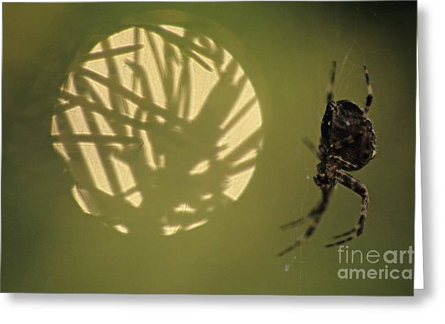 Predaceous Greeting Cards - Spider and Sunlight Greeting Card by Jim Corwin