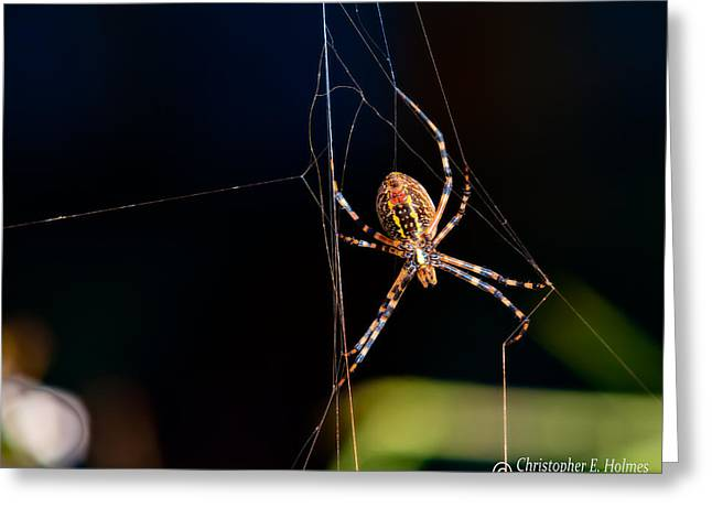 Spider Greeting Card by Christopher Holmes