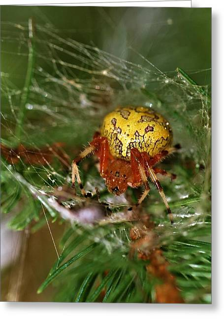 Itsy Bitsy Spider Greeting Cards - Spider Greeting Card by Dan Sproul