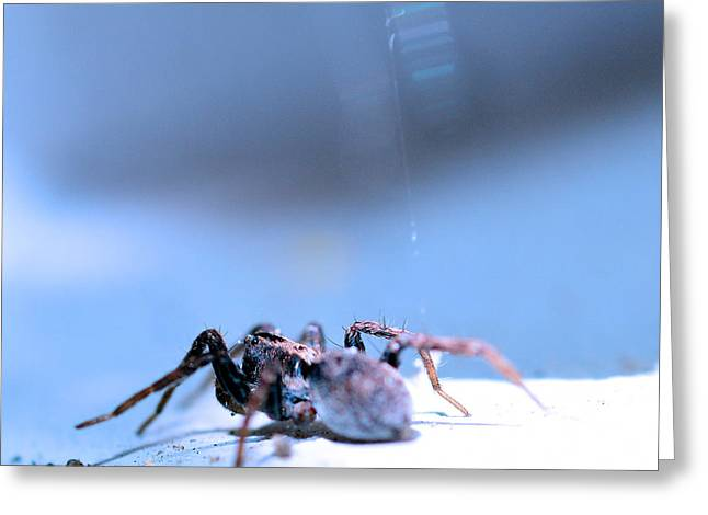 Metallica Greeting Cards - Spider in blue tone Greeting Card by Toppart Sweden
