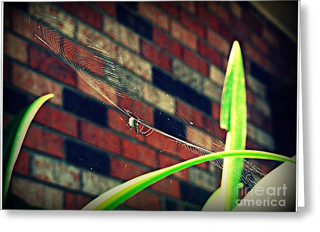 Charlotte Digital Art Greeting Cards - Spider in its Web Greeting Card by Meagan Hoelzer