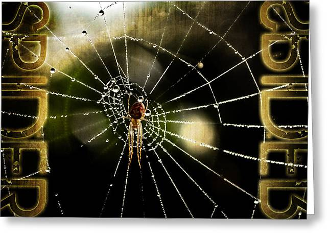 Arachnids Greeting Cards - Spider in the web Greeting Card by Toppart Sweden