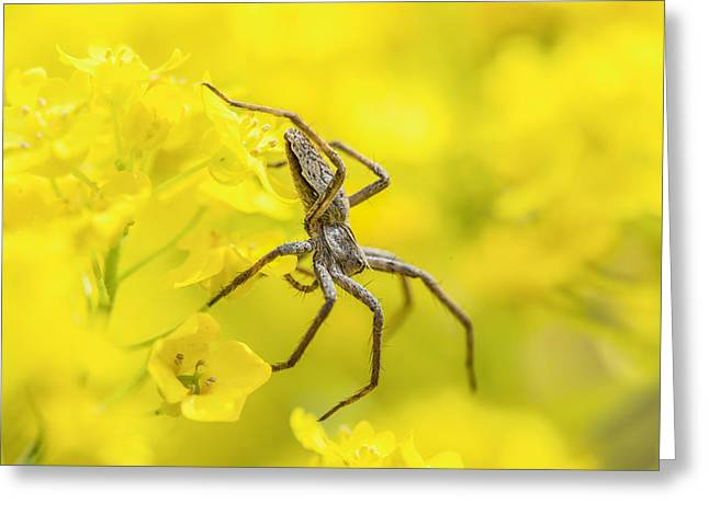 Arachnid Greeting Cards - Spider Greeting Card by Jaroslaw Grudzinski