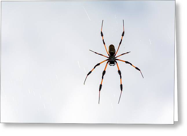 Yikes Greeting Cards - Spider Greeting Card by Manuel Lopez