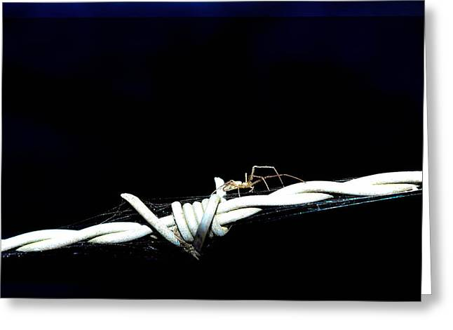 Arachnida Greeting Cards - Spider on barb wire Greeting Card by Toppart Sweden