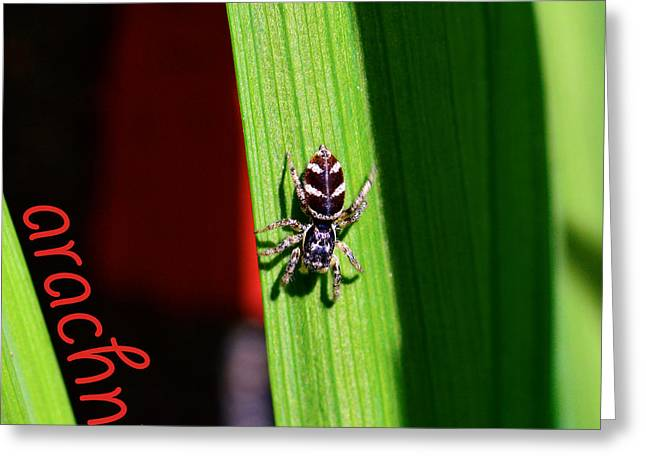 Metallica Greeting Cards - Spider on green leaf Greeting Card by Toppart Sweden