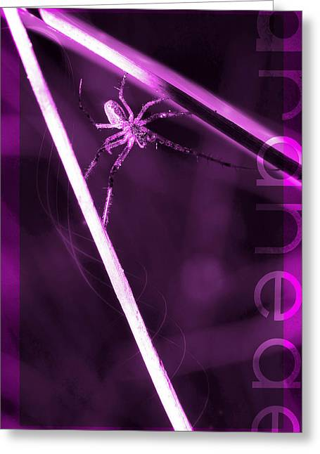 Arachnida Greeting Cards - Spider on sticks Greeting Card by Toppart Sweden