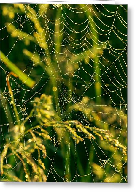 Dew Digital Art Greeting Cards - Spider Web Greeting Card by Amanda Kiplinger
