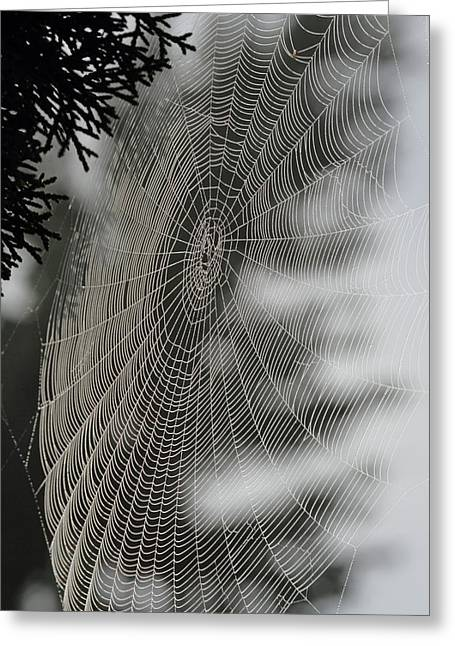Dew Covered Greeting Cards - Spider Web Greeting Card by Angie Vogel