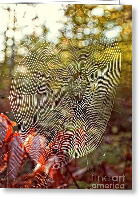 Wet Greeting Cards - Spider Web Greeting Card by Edward Fielding