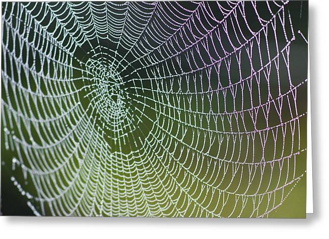 Heiko Koehrer-wagner Greeting Cards - Spider Web Greeting Card by Heiko Koehrer-Wagner