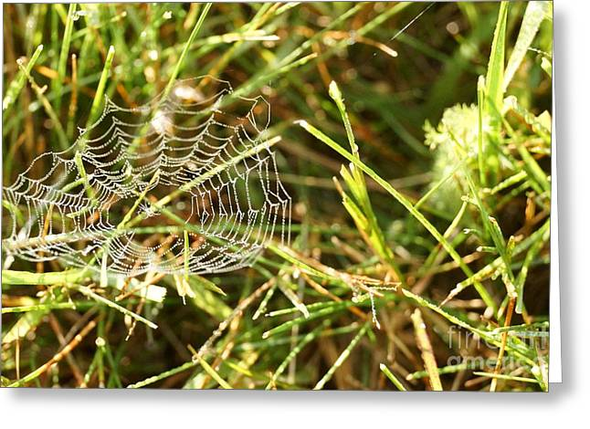 Dewiness Greeting Cards - Spider Web in Grass Greeting Card by Kerri Mortenson