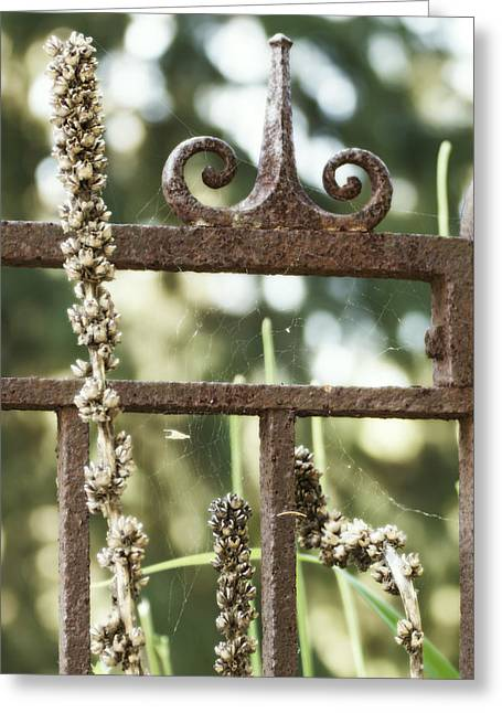 Flowers On A Fence Greeting Cards - Spider Web on a Wrought Iron Fence Greeting Card by Tracy Winter