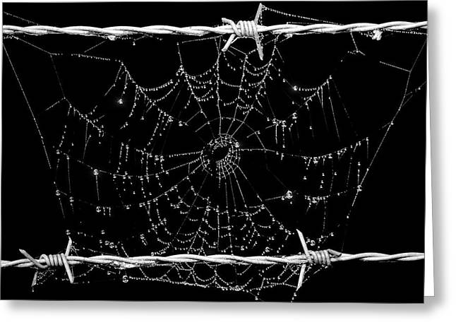 Arachnids Greeting Cards - Spider web on barbed wire Greeting Card by Toppart Sweden