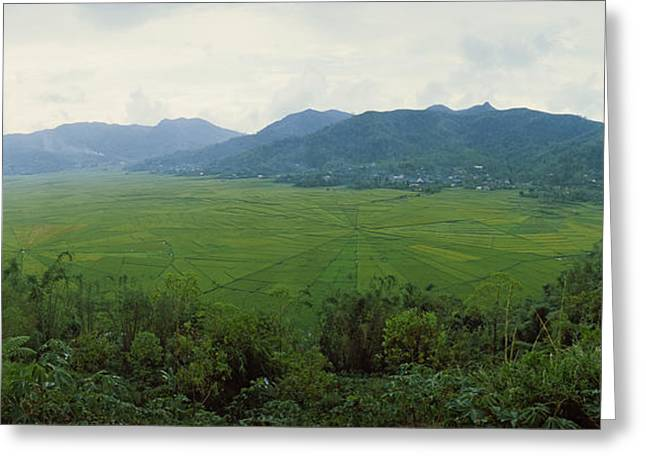 Flores Greeting Cards - Spider Web Rice Field, Flores Island Greeting Card by Panoramic Images