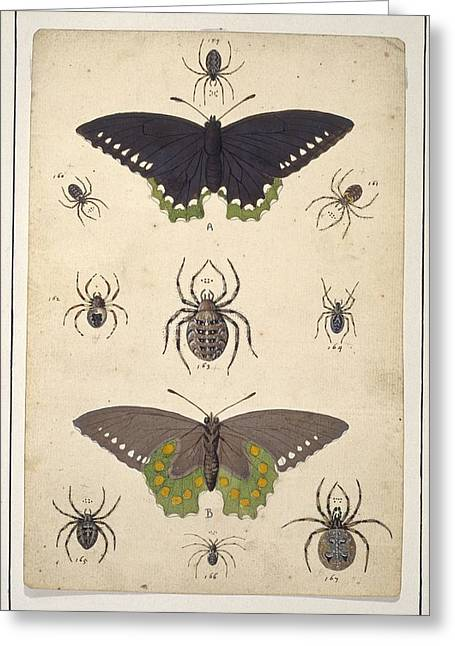 Artwork Of Butterfly Greeting Cards - Spiders and butterflies, artwork Greeting Card by Science Photo Library