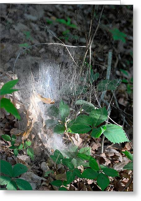 Fall Colors Greeting Cards - Spiders Webs 45 Greeting Card by Lawrence Hess