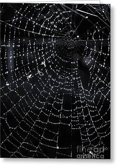 Moist Greeting Cards - Spiderweb Greeting Card by Elena Elisseeva