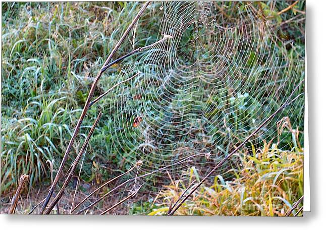Galveston Greeting Cards - Spiderweb Exposed Greeting Card by Audrey Van Tassell