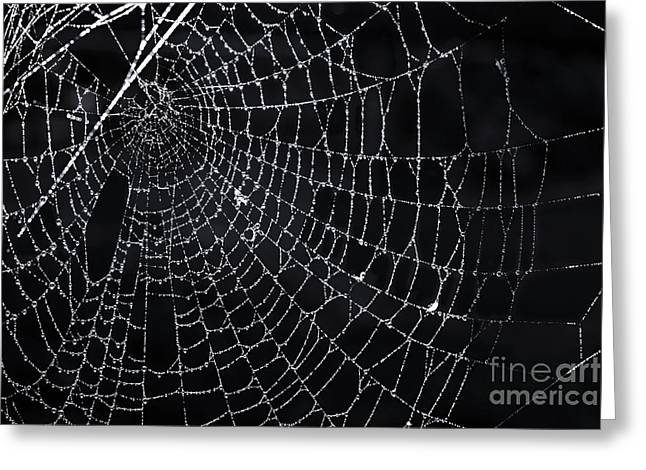 Moist Greeting Cards - Spiderweb with dew Greeting Card by Elena Elisseeva