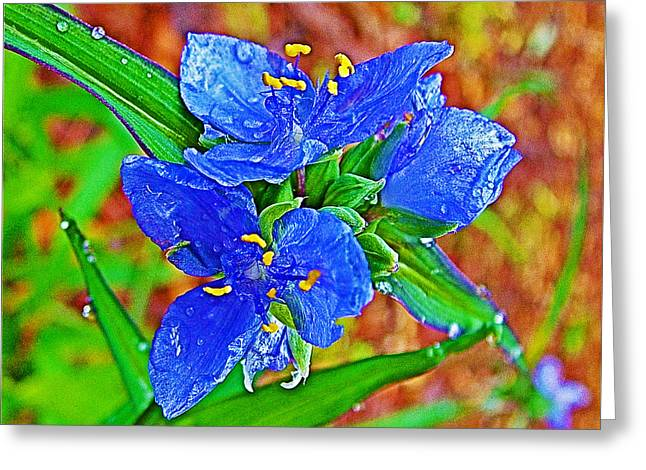 Natchez Trace Parkway Greeting Cards - Spiderwort at Mile 122 in Natchez Trace Parkway-Mississippi  Greeting Card by Ruth Hager