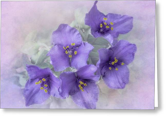 Spiderwort Cluster Greeting Card by David and Carol Kelly