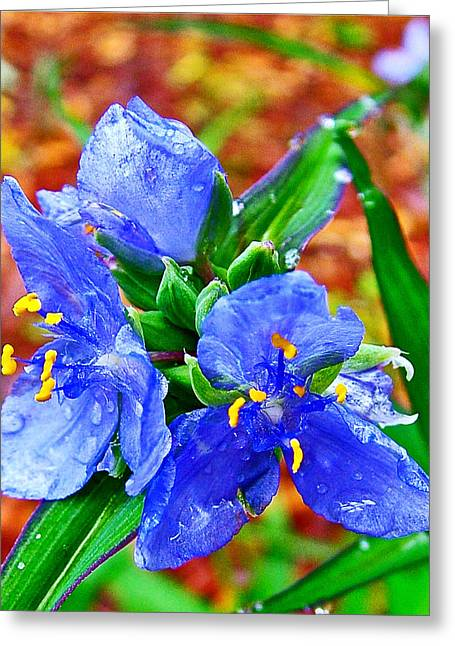 Spiderwort On Mile 122 Of Natchez Trace Parkway-mississippi  Greeting Card by Ruth Hager