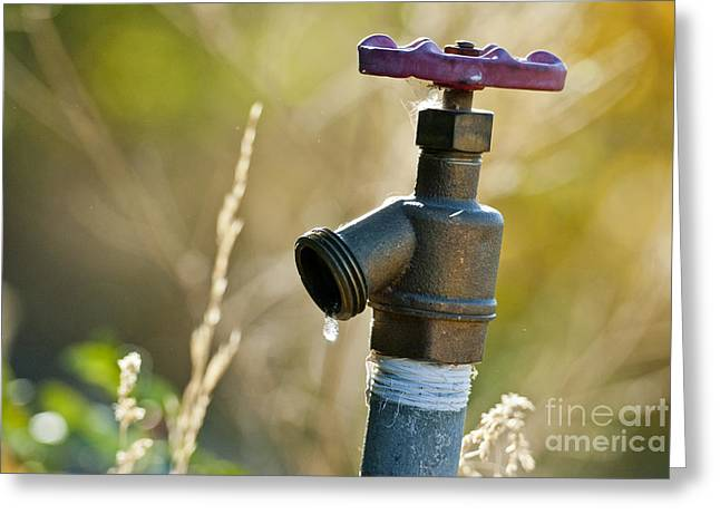 Faucet Greeting Cards - Spigot With Water Drop Greeting Card by William H. Mullins