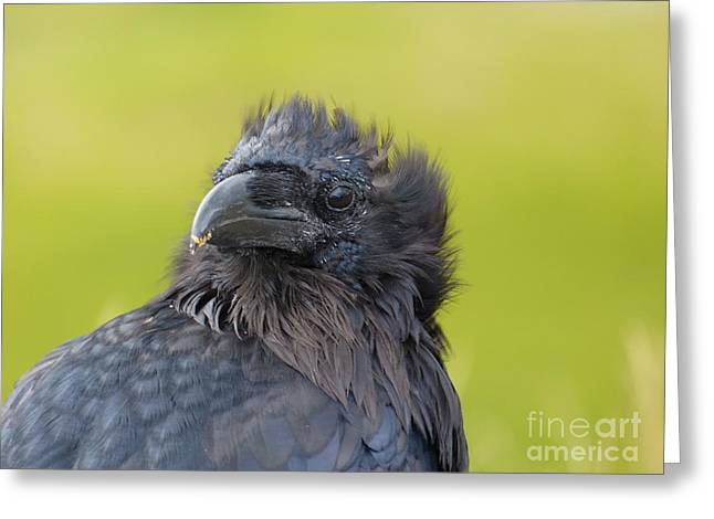 Raven Haired Greeting Cards - Spiked Raven Greeting Card by Drew Lepley