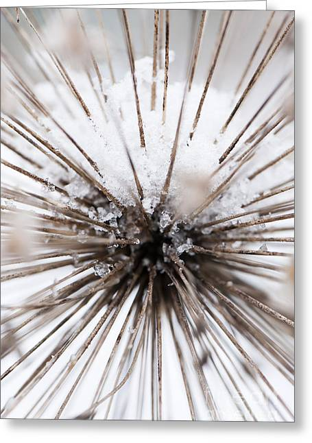 Wintry Photographs Greeting Cards - Spikes and Ice Greeting Card by Anne Gilbert