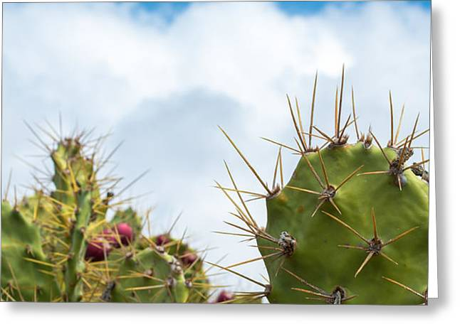 Thorny Desert Plant Greeting Cards - Spikey Cactus and Clouds Greeting Card by Chay Bewley