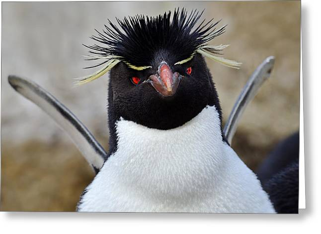 Falkland Islands Greeting Cards - Spiky Greeting Card by Tony Beck